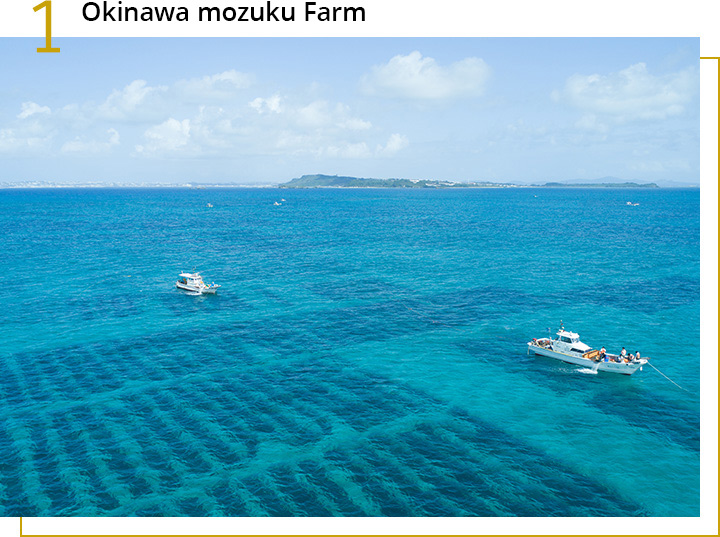 Okinawa Mozuku Farm in Japan