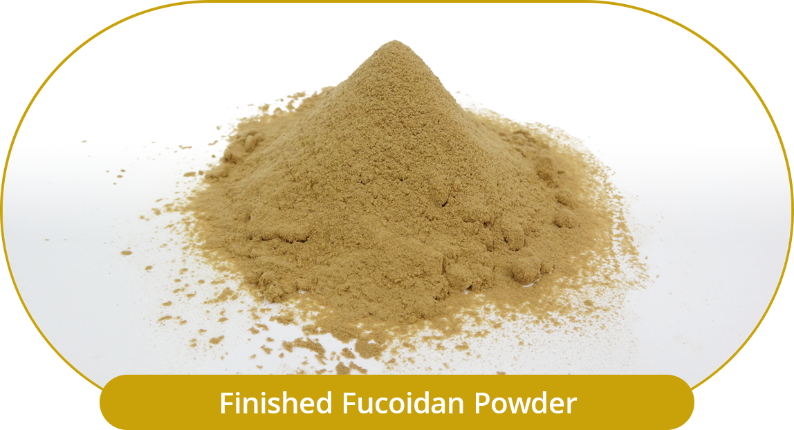 Completed Fucoidan Powder.