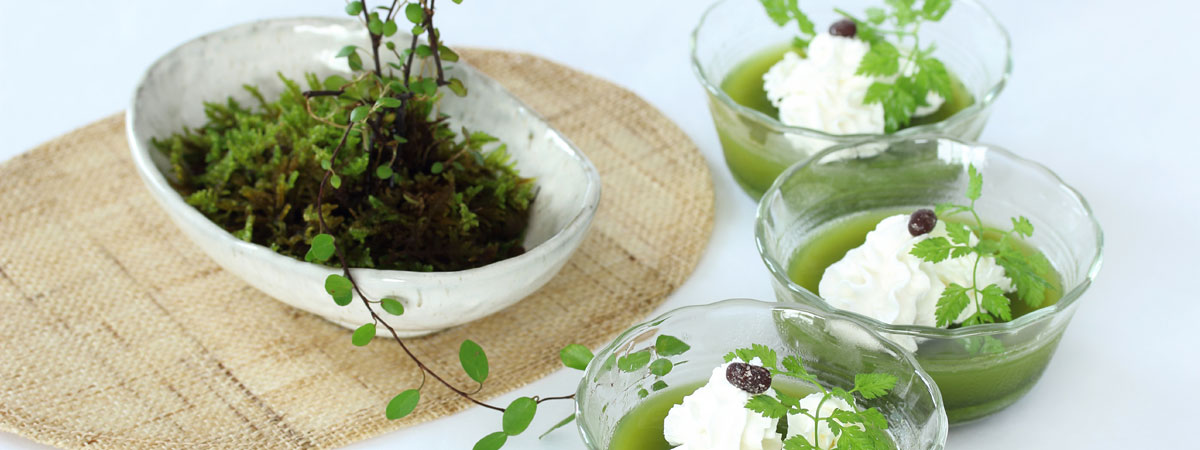 Green tea jello